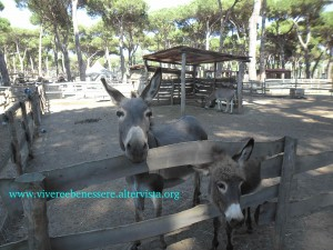 La fattoria degli animali Ostia Antica