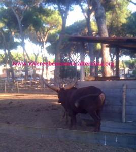 La Fattoria degli Animali, Ostia Antica