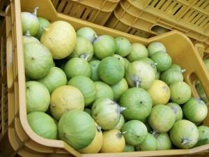 http://it.wikipedia.org/wiki/Citrus_%C3%97_bergamia
