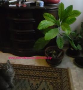 ottenere una pianta di avocado dal seme