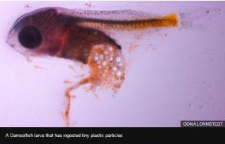 http://effemeride.it/la-microplastica-mette-pericolo-pesci-la-preferiscono-allo-zooplancton/#
